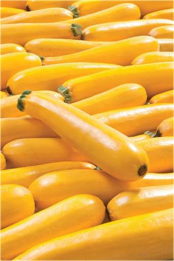 cukinia zółta